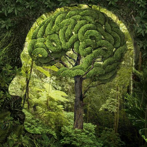 Nature-Brain