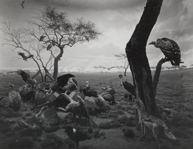 hyena-jackal_vulture_1976_gelatin_silver_print_c_hiroshi_sugimoto_RezWT_W1600_H1235_H1235_Q85