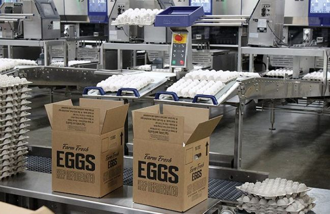 egg-packaging